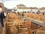 The market square during Masham Sheep Fair