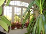 Window overlooking the garden