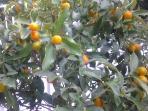 vegetazione del giardino