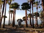 Elephant Shower at San Pedro Beach