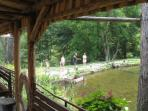 Trout farm above Dobrinisht, a great days fishing, eat what you catch.