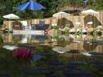 Chemical-free eco-pool