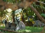 Fuengirola Zoo