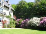 Large private garden - giant Rhododendron & Camelia. Planted 1600 bulbs, daffs, tulips, bluebell