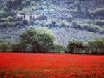 Popper fields