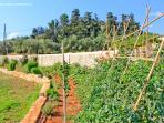 Garden with Cretan Products