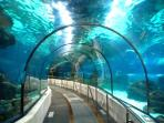 Benalmadena Sea Life Aquarium - a fascinating experience.  Great for  children and adults alike.