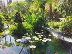 The Oasis Koi Carp fish pond.
