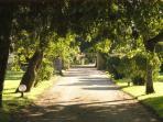 Domaine du treuil - Le parc
