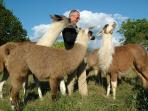 Nos adorables lamas.
