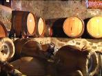 cantina sotterranea, dove matura il vino migliore