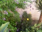 Garden all around the property