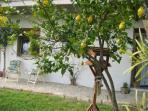The Kitchen window through the lemon tree