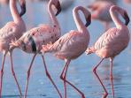 ..il Delta vanta più di 360 specie volatili....