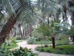 'Huerta de Cura' - famous for it's haemophrodite palm tree. This palm farm locally is