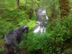 Waterfall at Strontian oakwoods