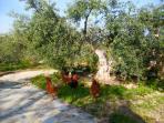 garden Casa Santo