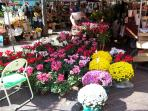 Flower Market in the old Town of Nice