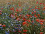 Just a field near La Pendarie