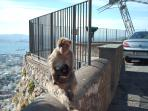 Top of Gibraltar with mummy and baby apes