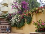 Agadir  blooms