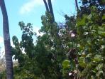 local vegetation