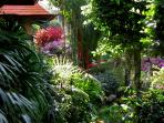 Tropical lush garden by the kitchen