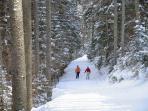 Ski path