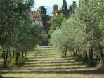 l'antico monastero di Muciafora tra gli olivi