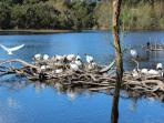 Bird sanctuary at Coolart homestead. Walking distance from cottage