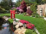 Schauen Sie sich unseren blühenden Japangarten mit dem großen Koiteich und den immer gefräßigen Koi.