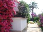 Colourful bourgainvillea