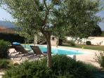 The pool from the terrace with young olive tree