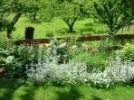 View into Cherry Orchard from garden