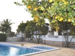 Beautiful setting of the villa, pool and citrus trees on the sun terrace.