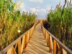 walk way to the dunes