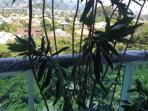 vista da varanda da suite