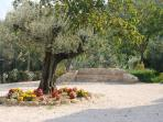 Enjoy La Macina di Bettona's gardens and olive groves