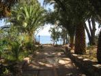 viale di palme con accesso alla spiaggia