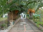 il viale di palme