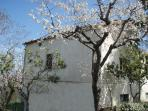 Rear of house with spring bloom