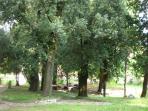 bosco di lecci