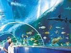 Newquay Bluereef aquarium