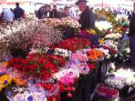 The flower market, five minutes walk from the aparment