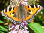 There are lots of butterflies on site, especially in the late summer