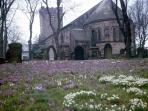 St Chads church carpeted with crocuses in Spring