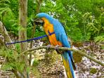 You will meet Kakou, our macaw, on the Terrasse.