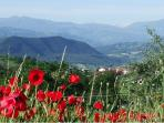 The flowers of early summer, unspoiled countryside - and more of our wonderful views !