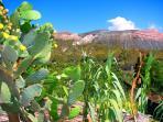 natura, policroma e lussureggiante : fichi d'idia ed il vulcano sullo sfondo.
