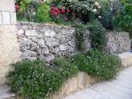 Garden during the Spring